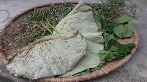 Pha trà từ thảo mộc thiên nhiên hỗ trợ giảm cân an toàn